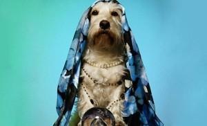 dog as an empath
