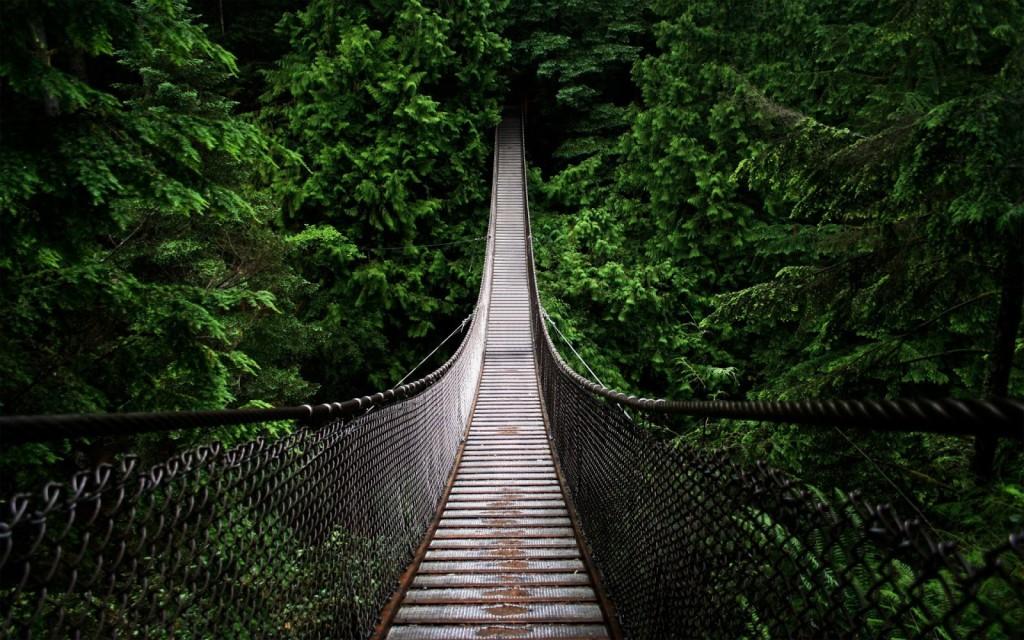 jungle_bridge-1920x1200